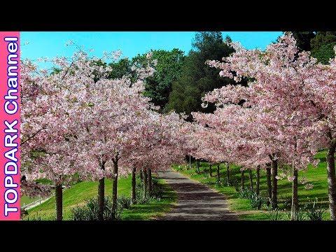 10 Increíbles arboles
