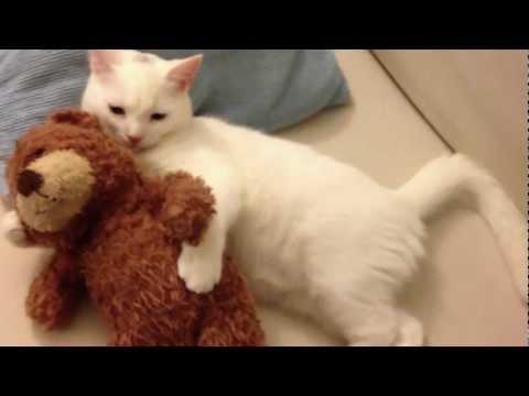 Sleepy Kitten hugs his teddy bear