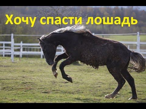 Вопрос: Почему зебра агрессивнее дикой лошади?