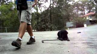 The Canine Classroom - Dog Training With Bo At Dog Boarding School