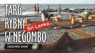 Baixar Niezwykly Swiat 4K - Sri Lanka - Negombo - Targ rybny
