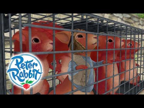 Peter Rabbit - Saving the Squirrels | Cartoons for Kids