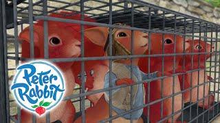 Peter Rabbit - Saving the Squirrels   Cartoons for Kids