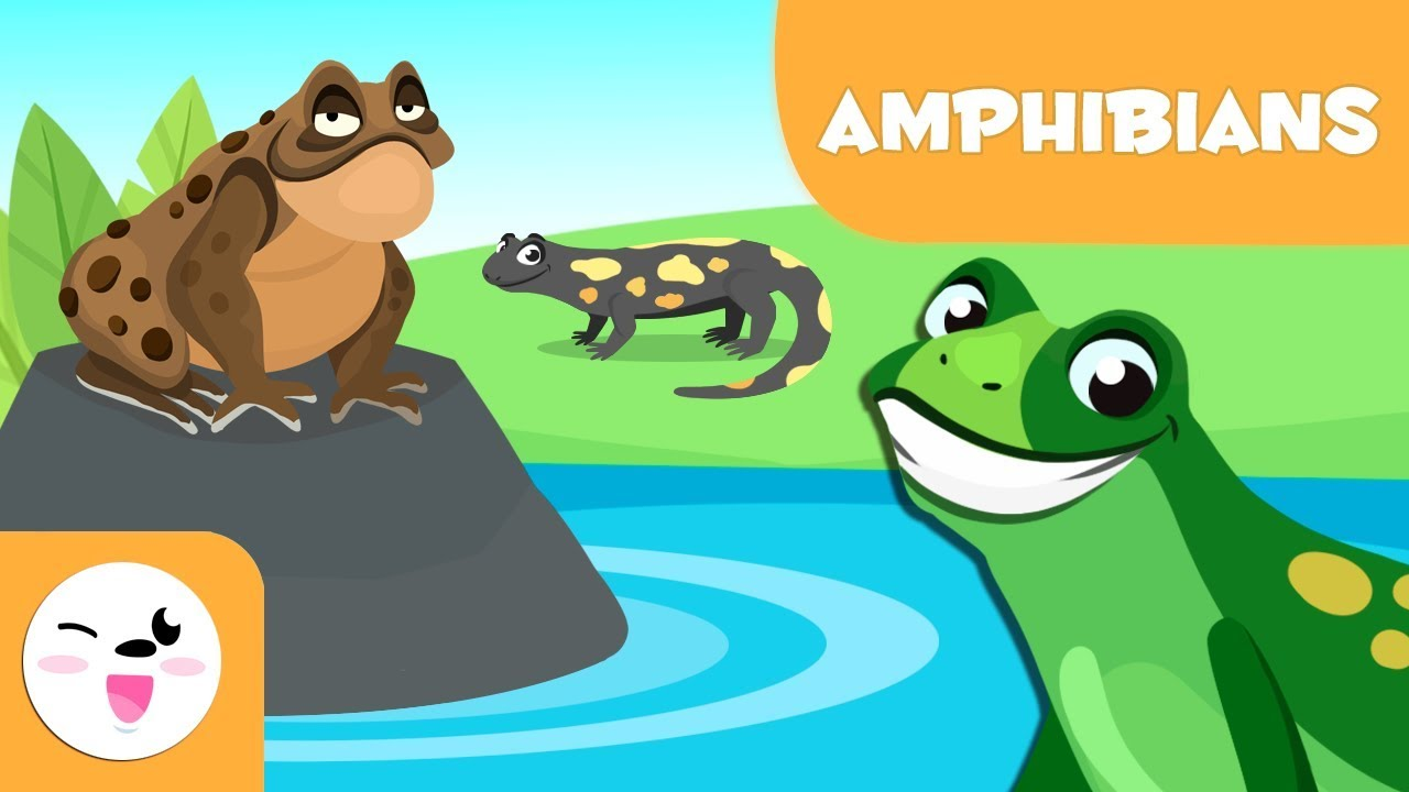 Amphibians for kids - Vertebrate animals - Natural Science For Kids -  YouTube [ 720 x 1280 Pixel ]