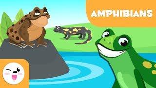 Amphibians for kids - Vertebrate animals - Natural Science For Kids