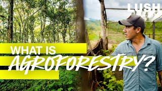 Lush Cosmetics: What is Agroforestry?