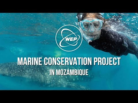 WEP: Ankie, Marine Conservation Project in Mozambique (Engels gesproken)