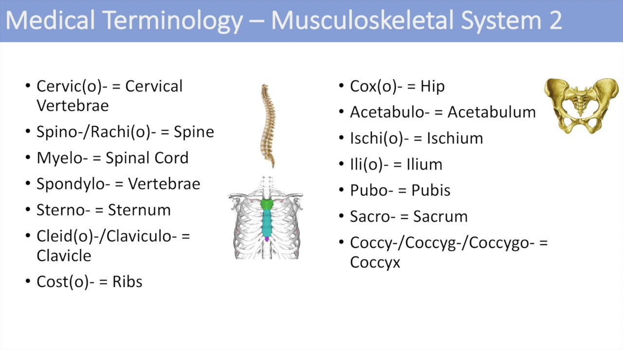 Medical Terminology Lesson 7 Musculoskeletal And Reproductive