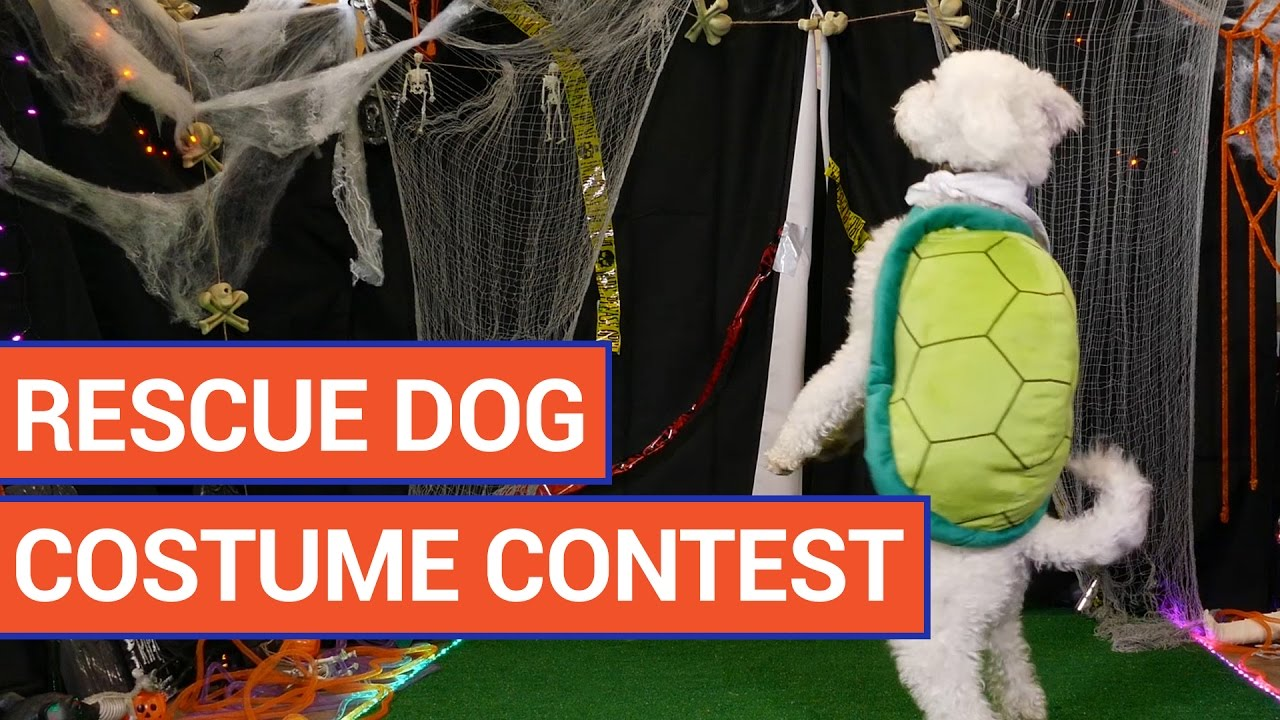 Puppy Halloween Costume Contest Video 2016 | Daily Heart Beat