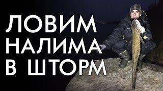 ЛОВИМ НАЛИМА В ШТОРМ / ПРОВЕРКА ПРОДОЛЬНИКОВ / РЫБАЛКА ОСЕНЬ 2018