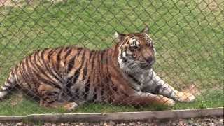 A Day at the Out of Africa Wildlife Park in Camp Verde, AZ