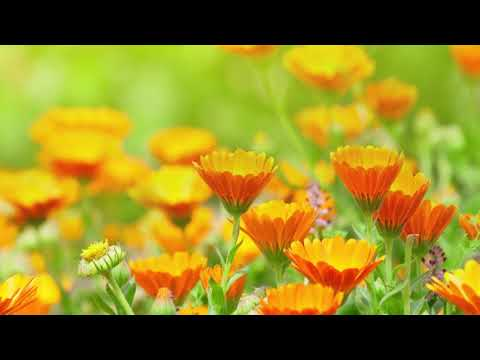 """Peaceful Music, Relaxing Music, Instrumental Music """"Quiet Beauty"""" by Tim Janis"""