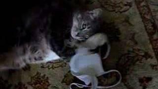 cat loves bra(, 2006-12-07T14:10:07.000Z)