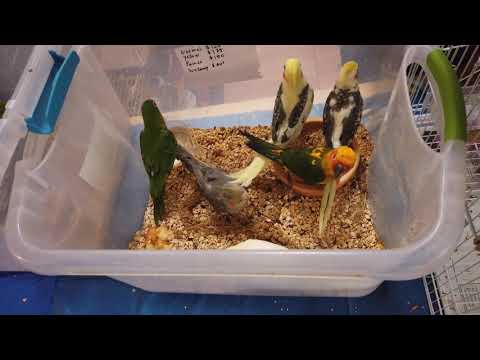 Bird Expo In Fremont!