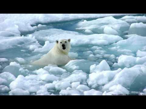 Melting Of The Polar Ice Caps