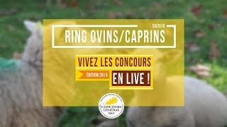 Ring Ovins et Caprins - 25.02.2018
