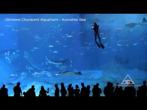 Самый большой аквариум в Окинаве (Япония)!