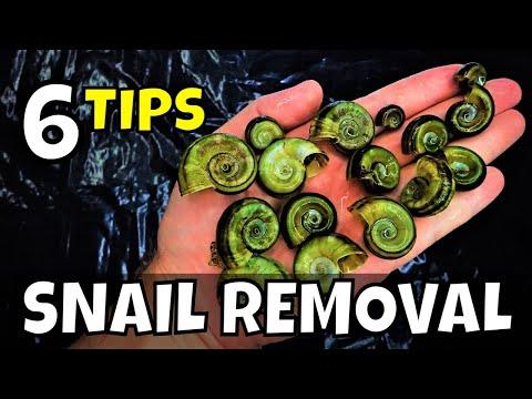 6 Ways To Remove Pest Aquarium Snails THAT ACTUALY WORK!!