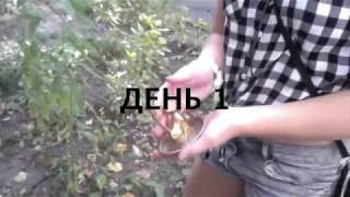 Страшный короткометражный фильм. Проклятие Статуэтки Кошки