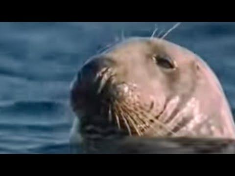 How marine mammals survive underwater life...