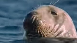 How marine mammals survive underwater life - BBC wildlife