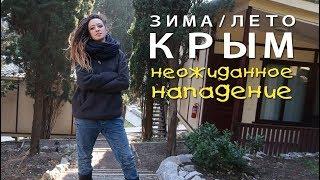 2 || ПОДЛОЕ НАПАДЕНИЕ || Сравниваем Крым зимой и летом || Охреневшие коты || Встреча с подписчиком