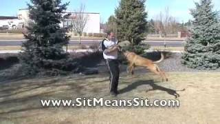 Sit Means Sit Dog Training - Boston, Massachusetts