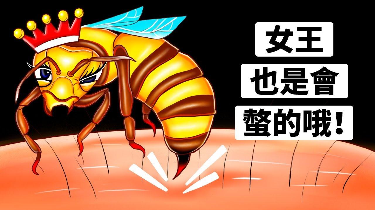 女王蜂螫會比較危險嗎?(我們找到了)