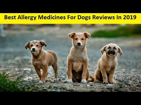 Top 3 Best Allergy Medicines For Dogs Reviews In 2019