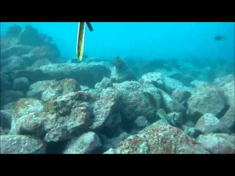 Shoal Bay Spearfishing Trip 13