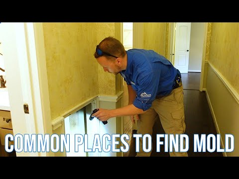 Common Places to Find Mold