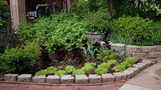 Planting day! Sweet Potatoes, Coleus, Sedum & Hellebores! 👩🌾🌿 // Garden Answer