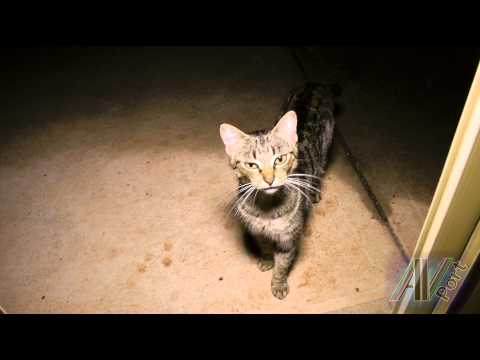 Wild Cat - feral mother cat growls and later gets a mouse