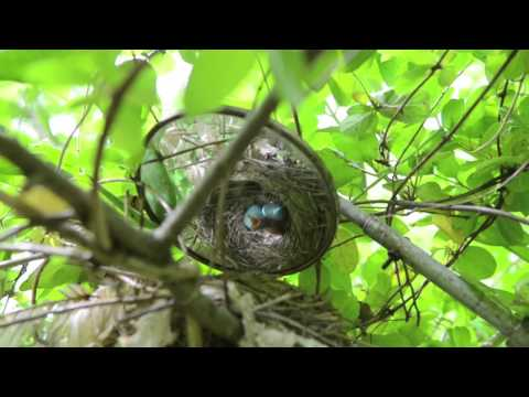 Zach Ladin on birth of baby bird in UD Ecology Woods