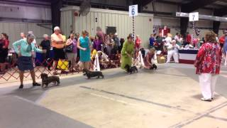 Jeanette & Wally ~ National Capital Kennel Club 7/6/2014
