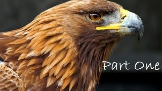 Golden Eagle as a Totem, PART ONE