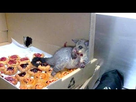 ANIMALS that will make you LAUGH ALL DAY, EVERY DAY! - The FUNNIEST VIDEOS