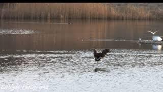 Lackford Lakes, Suffolk