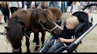 Paardenmarkt - 2e Pinksterdag - Traditionele paardenhandel / Heenvliet 2018