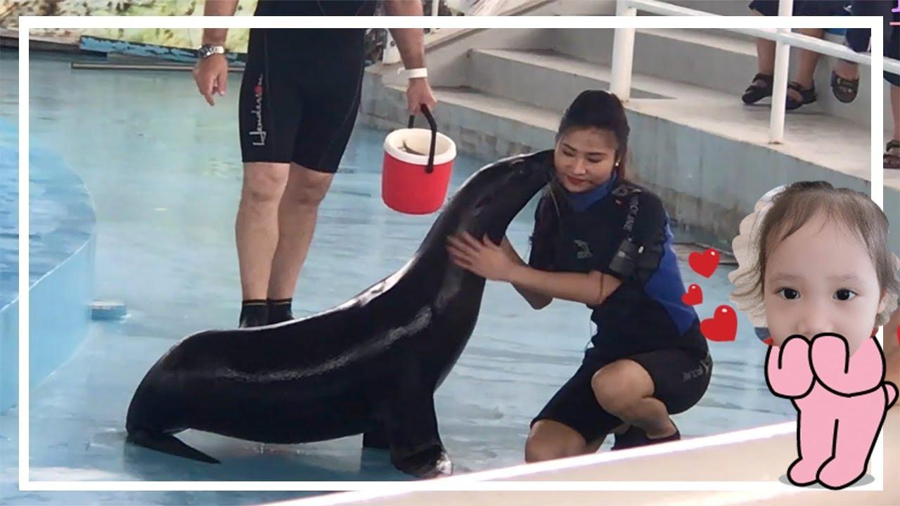 Hải cẩu biểu diễn nghệ thuật vui nhộn - Khám phá Tuần Châu Hà Nội BaaraLand   Bông Bống TV