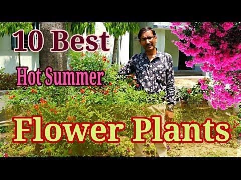 10 Best Permanent Heat Tolerant Flowering Plants For Full Sun