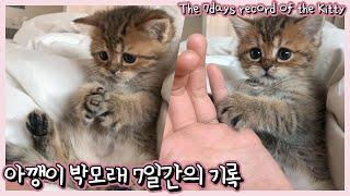 ENG) 아기 고양이 일주일간의 기록 | 적응천재 고양…