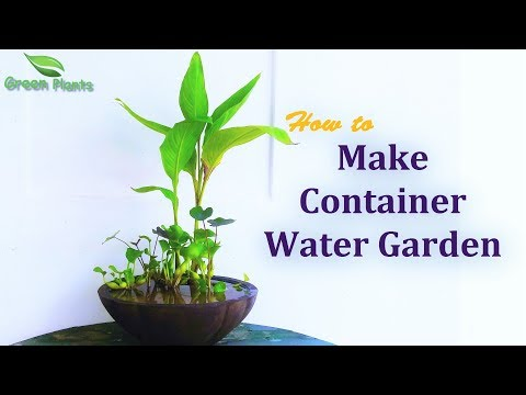How To Make Container Water Garden | Water Garden With Fish | Backyard Ideas//GREEN PLANTS