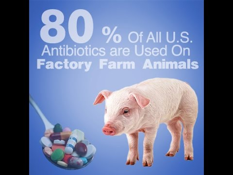 DRUGGED up Animals MEAT sick unsantiary Factory-Farms USDA Agriculture Superbug FDA Chicken Vegan
