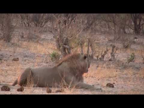 Botswana 2016 , Highlights einer Traumreise