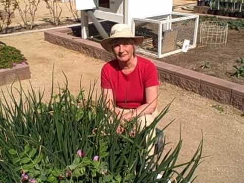 Growing Food in the Desert - Winter Vegetable Garden in ...