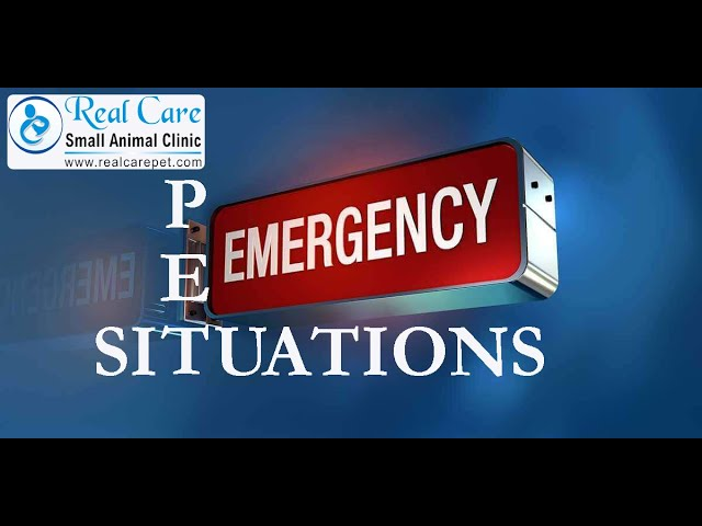 Tips to handle emergency situations for pet parents