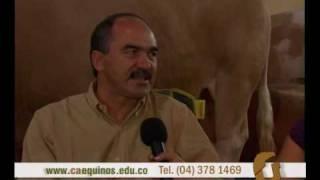 Caequinos habla con un especialista de la raza simmental y simbrah