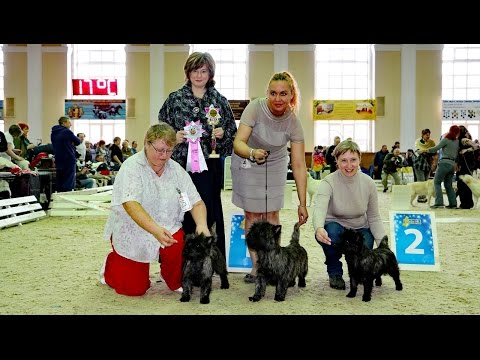 National specialty show Champion Club Cairn Terrier in Russia 04.2016