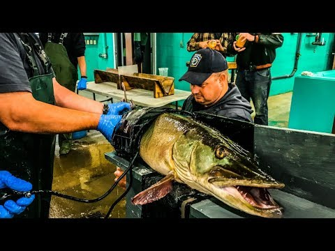 PA Fish & Boat - Linesville Fish Hatchery Visit - Musky Spawning With Jared Sayers